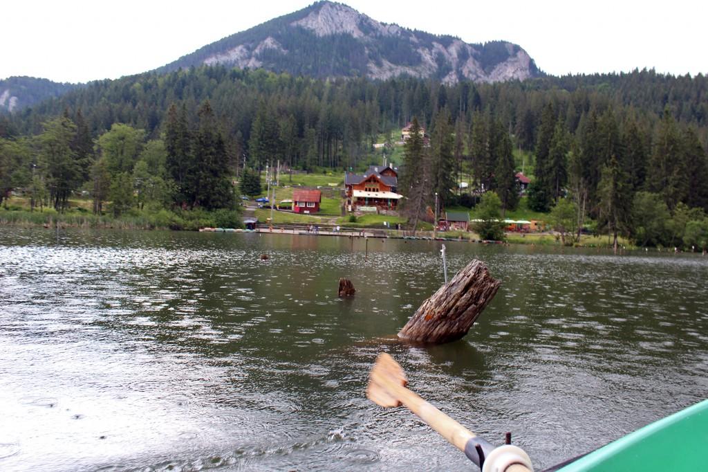 Fenyőfa törzse és csónakunk lapátja