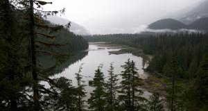 Nagymedve esőerdő (Wikipedia)