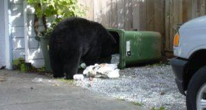 blackbeargarbagecanada