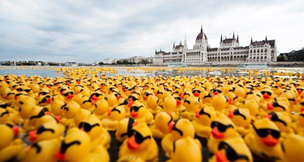 Kacsadömping Magyarországról (Fotó: Illusztráció)